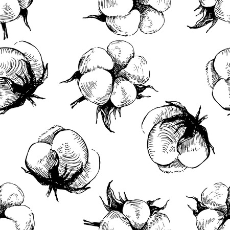 cotton plant: hand drawn seamless pattern with cotton plant  on white background