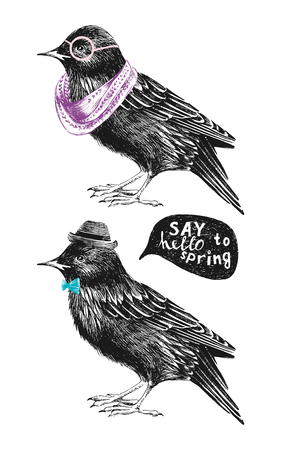 anthropomorphic: dressed up hand drawn starling couple