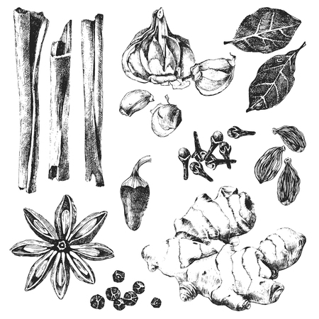 ginger root: black and white hand drawn spices set Illustration