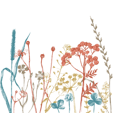 hand drawn: Border with hand drawn herbs and flowers Illustration