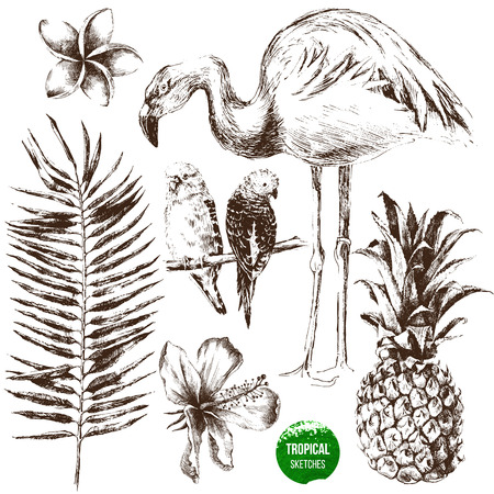 Set of highly detailed hand drawn tropical plants and birds Ilustração