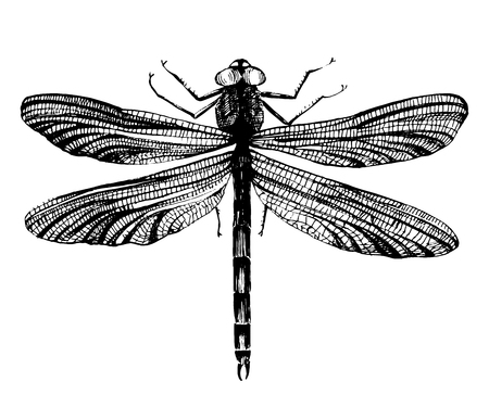 anisoptera: Black hand drawn dragonfly on white background