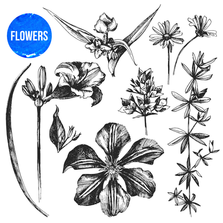 highly: Highly detailed hand drawn flowers set
