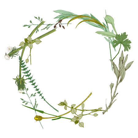 botanical drawing: wreath made with hand drawn wild herbs