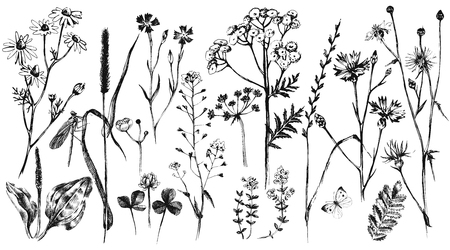 flower  hand: Hand drawn set with black and white herbs and flowers Illustration