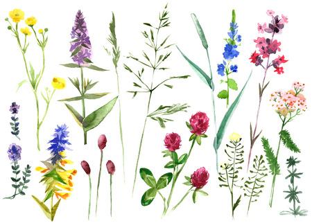 Dibujado a mano de acuarela conjunto con las hierbas y las flores coloridas Foto de archivo