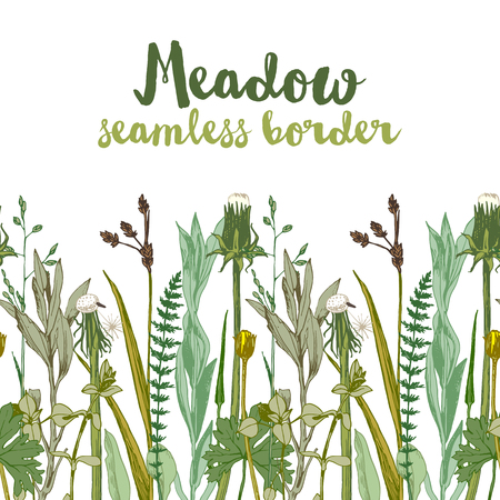 Hand drawn seamless herbal border