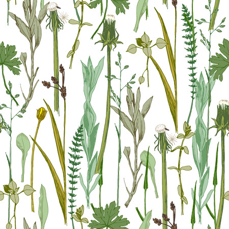 Hand drawn seamless herbal pattern