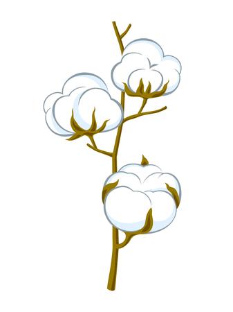 cotton brunch on white background Illustration
