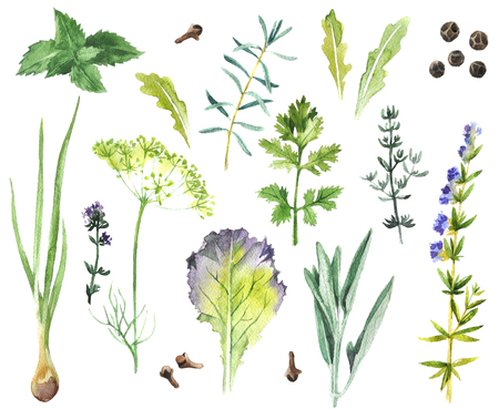 osolated: Hand drawn watercolor herbs and spices collection
