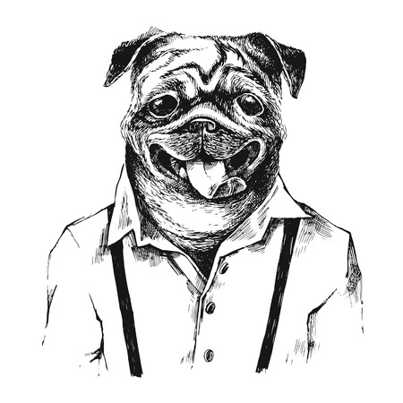 anthropomorphism: Hand drawn dressed up black and white pug in hipster style