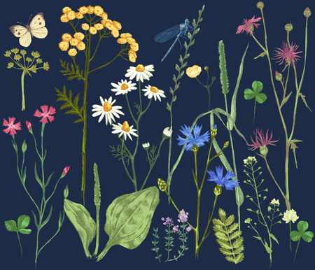 meadow: Hand drawn set with colorful herbs and flowers on dark background