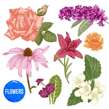 flower  hand: Hand drawn colorful garden flowers set