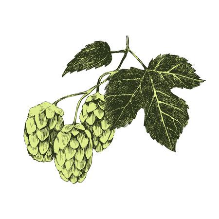 Hand drawn hop plant