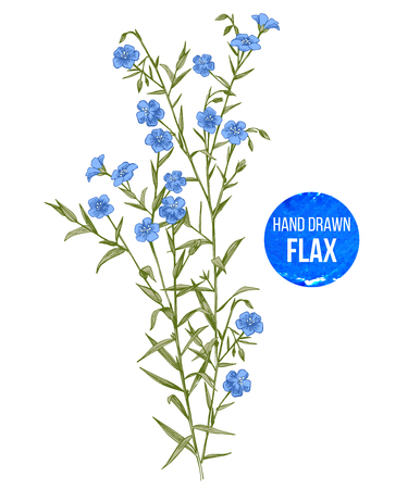 Hand drawn colorful flax flowers Illustration