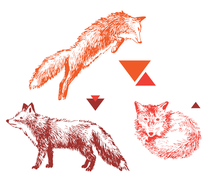 3 hand drawn foxes in different poses
