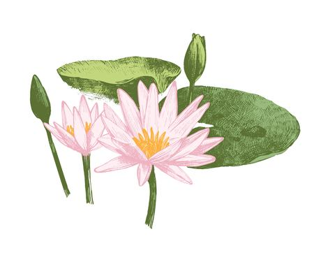 Hand drawn water lily flowers Stock Illustratie
