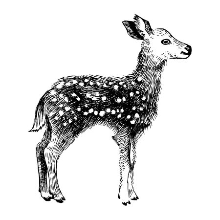 Hand drawn baby deer in vintage style Illustration