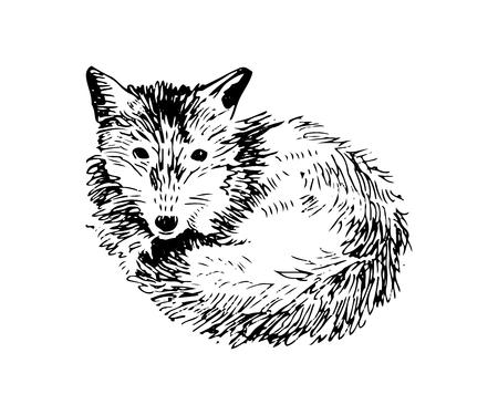 Hand drawn fox