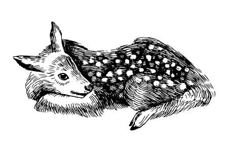 herbivores: Hand drawn baby deer in vintage style Illustration