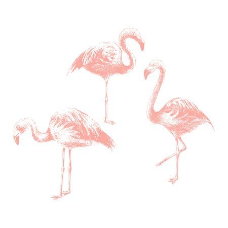 Hand drawn flamingoes