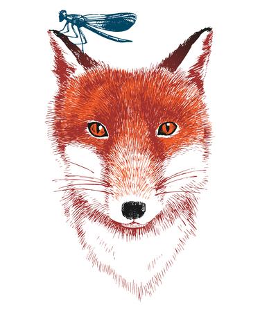 Hand drawn fox and dragonfly Illustration