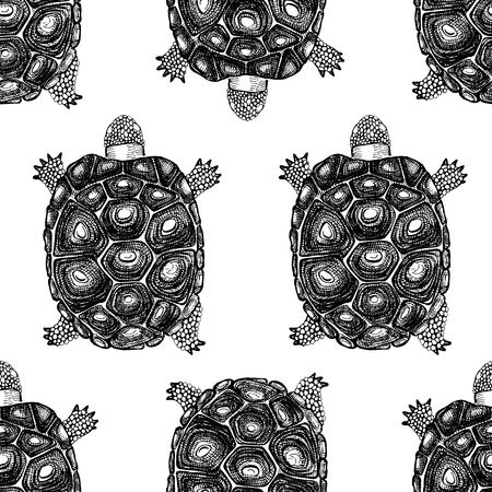 Pattern with hand drawn turtles.