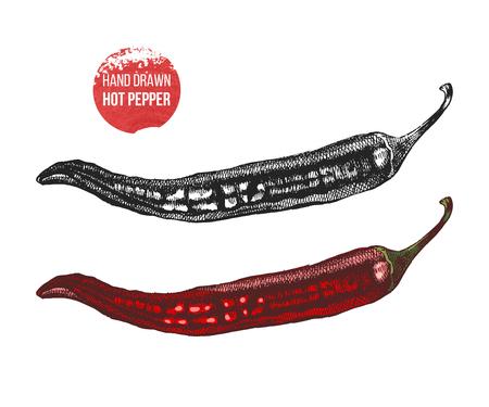 Hand drawn illustration of Chili Pepper. Illustration