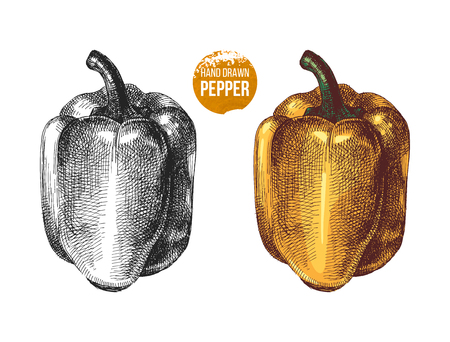 Hand drawn vector sweet peppers