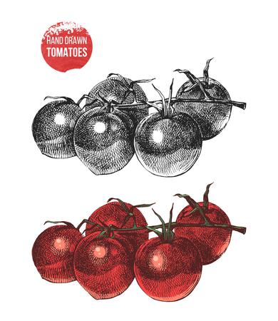 Hand drawn cherry tomatoes Illustration