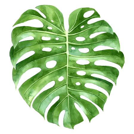 水彩モンステラ植物緑葉