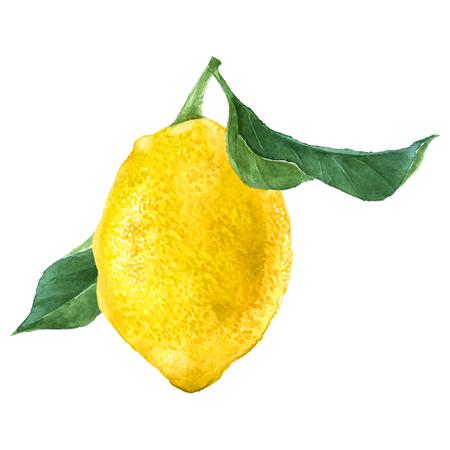 수채화 레몬 과일 일러스트