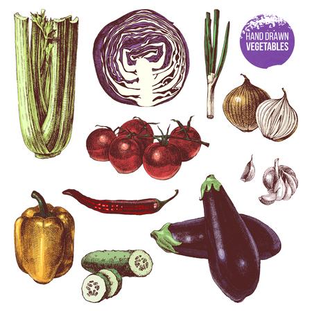 Hand drawn vegetables set Illustration