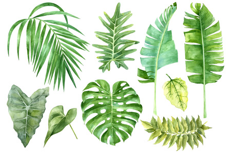 Set of tropical watercolor leaves