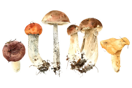 Hand drawn watercolor mushrooms Vettoriali
