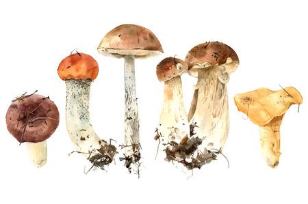 Funghi dell'acquerello disegnato a mano Vettoriali