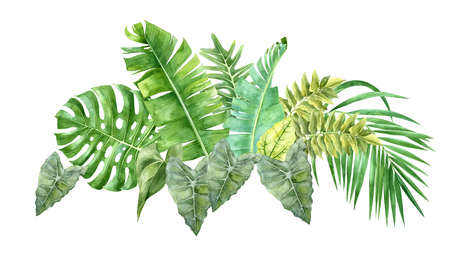 watercolor border with tropical leaves Banque d'images