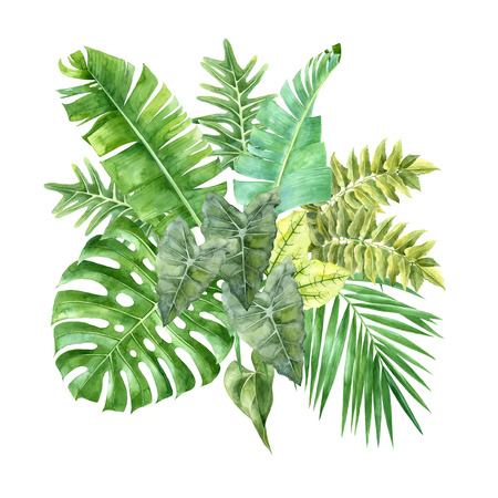 Watercolor tropical leaves isolated on white background 스톡 콘텐츠