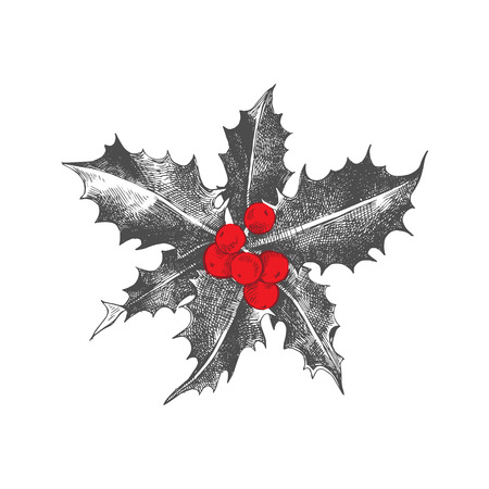 Holly berry Christmas icon. Illustration