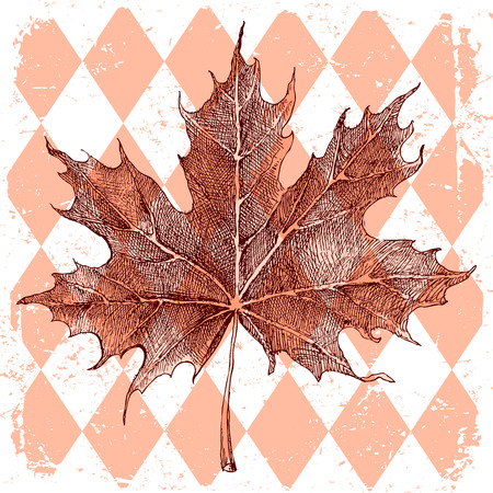 Hand drawn maple leaf on rhombic background