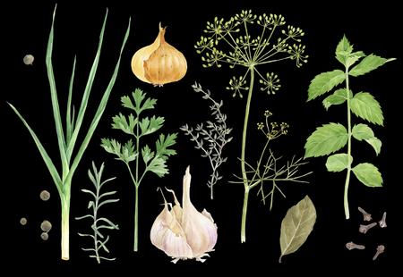 Aquarel kruiden en specerijen