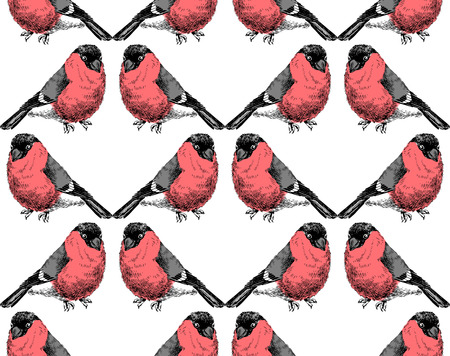 Hand sketched pattern with bullfinches Ilustracja