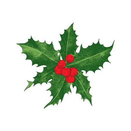 Holly berry Christmas icon. Иллюстрация