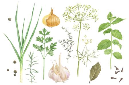 Waterkleurige kruiden en specerijen