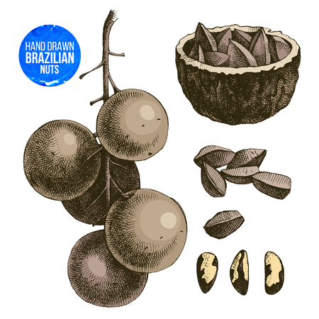 Hand drawn colorful brazil nuts set. Vector illustration