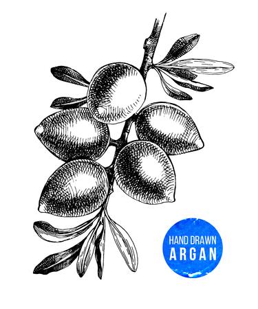 Hand drawn argan nuts branch