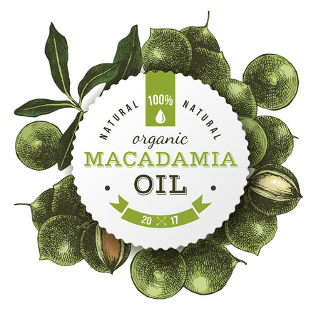 Macadamia oil label with hand drawn nuts Illustration