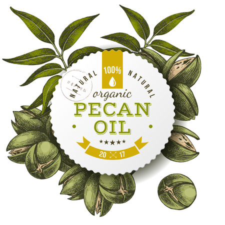 Pecan oil label over hand drawn nuts