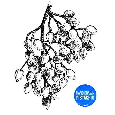Black and white hand drawn branch of pistachio tree. Vector illustration