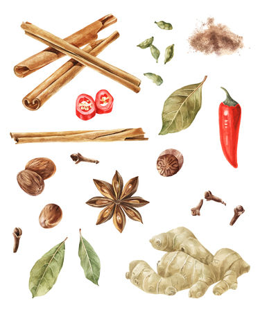 Watercolor spices isolated on wite background